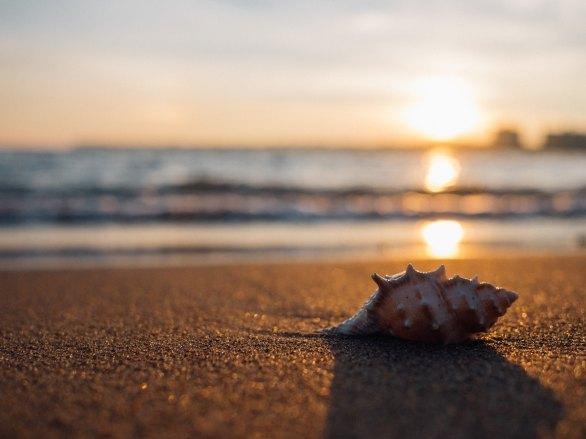 Photo of a sea shell on a beach