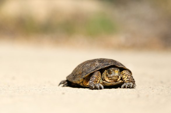 Photo of a turtle